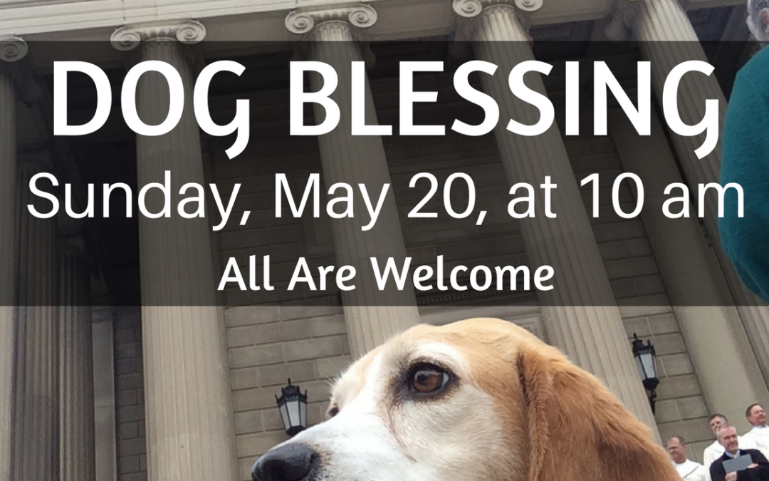 Dog Blessing – This Sunday!